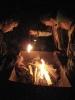 Alligators: Grille und Chille im Wald_1