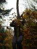 Phoenix und Devils im Wald